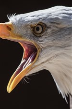 Preview iPhone wallpaper Eagle, head, beak, black background