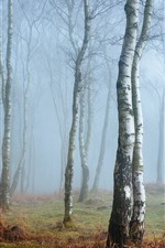 Preview iPhone wallpaper England, Peak District, Derbyshire, birch, forest, fog