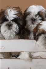 Five furry dogs, box