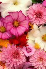 Fundo de flores, muitos tipos, rosa