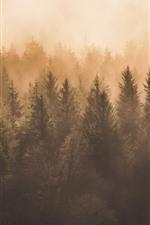 iPhone fondos de pantalla Bosque, niebla, mañana