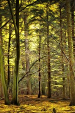 Preview iPhone wallpaper Forest, trees, art style