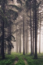 Preview iPhone wallpaper Forest, trees, fog, path, nature scenery