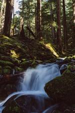 iPhone fondos de pantalla Bosque, árboles, musgo, arroyo