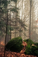Forest, trees, stones, moss, autumn