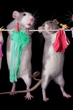 Preview iPhone wallpaper Four rats working
