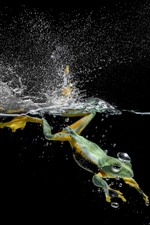 Frog swimming in water