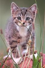 Furry kitten front view, grass