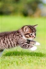 Preview iPhone wallpaper Furry kitten play in grass