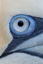 Preview iPhone wallpaper Gannet eye macro photography