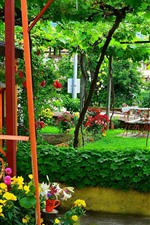 Garden, vines, flowers, green, summer