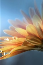 Preview iPhone wallpaper Gerbera, yellow flower, petals, water drops