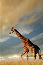 Preview iPhone wallpaper Giraffe, nature, grassland
