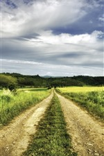 Preview iPhone wallpaper Grass, fields, path, summer