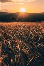 Preview iPhone wallpaper Grass, fields, sunrise