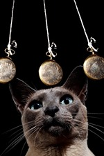 Preview iPhone wallpaper Gray cat look at pendulum, black background