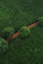 Preview iPhone wallpaper Green fields, path, trees, top view
