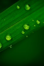 Preview iPhone wallpaper Green leaf, after rain, water droplets