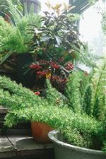 Preview iPhone wallpaper Green, plants, houseplants