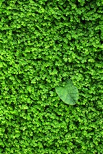 Preview iPhone wallpaper Green plants, leaves, background