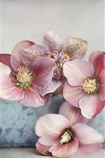 Preview iPhone wallpaper Hellebore, pink flowers close-up