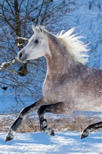 Preview iPhone wallpaper Horse running, winter, snow, trees