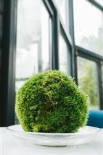 Preview iPhone wallpaper Houseplants, green ball