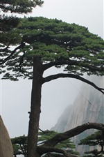Preview iPhone wallpaper Huangshan, pine tree, cliff, fog, China