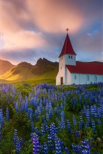Preview iPhone wallpaper Iceland, church, blue flowers, spring