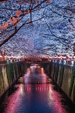 Japan, Sakura, river, night, lights