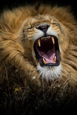Preview iPhone wallpaper Lion yawn, black background