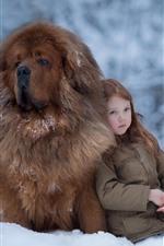 Little girl and Tibetan Mastiff, snow, winter