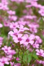 小さな紫色の花、春