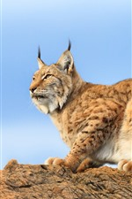 Preview iPhone wallpaper Lynx, rocks, blue sky