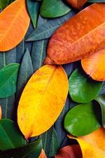 Viele Blätter, grün und orange
