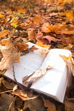 Maple leaves, book, ground