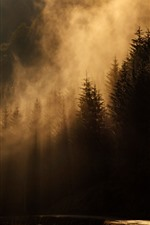 Preview iPhone wallpaper Morning, forest, fog, sun rays