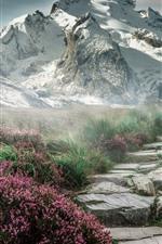 Montanhas, grama, flores, neve, nevoeiro