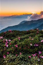 Preview iPhone wallpaper Mountains, top, flowers, fog, morning, clouds, sunrise