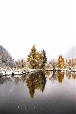 Montanhas, árvores, lago, neve, inverno, nevoeiro