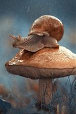 Preview iPhone wallpaper Mushroom, snail, insect, rainy
