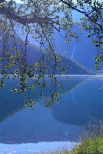 Norway, Eidsvatnet Lake, water reflection, tree, grass, mountains