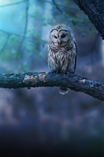 Preview iPhone wallpaper Owl in the forest, bokeh