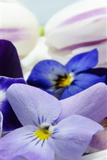 Preview iPhone wallpaper Pansy, colorful flowers