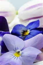 iPhone壁紙のプレビュー パンジー、カラフルな花