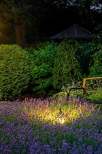 Park, bench, lavender, lamp, night