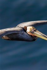 Preview iPhone wallpaper Pelican flight, wings