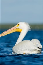 Preview iPhone wallpaper Pelican, white feather bird, sea, water