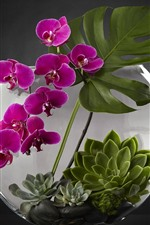 Preview iPhone wallpaper Phalaenopsis, purple flowers, succulent plants