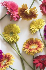 Preview iPhone wallpaper Pink, yellow, purple, gerbera